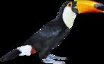 MRD_SeaMemories_black bird.png
