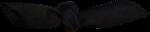 MRD_SeaMemories_black bow.png