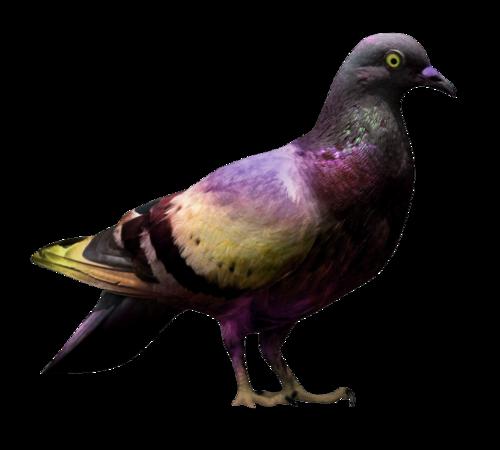 """Tubes oiseaux """"colombes/tourterelles/pigeons"""