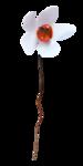 «Musical Flowers» 0_8a300_7318200e_S