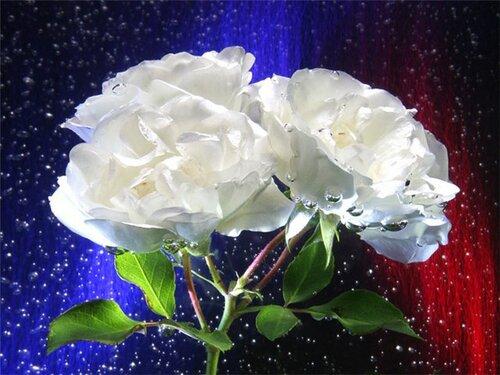 Розы в синем хрустале