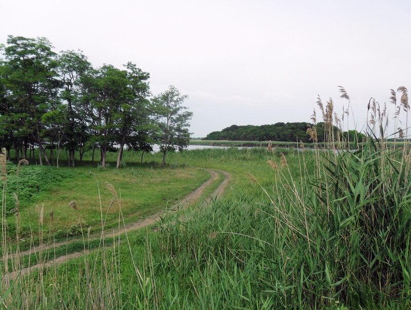 Дорога к Новоминской, июнь 2012