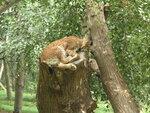 Кошки днем спят