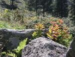 листья и камни