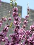 Китай, Стена и цветы