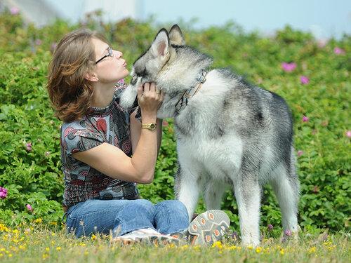 http://img-fotki.yandex.ru/get/0/malamute-akbar.38/0_2911f_86d41062_L.jpg