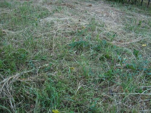Пожухлая трава