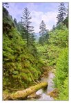 Вот такой вот волшебный лес