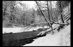 Черно-белые краски зимы