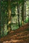 Вот такой он, черный лес.