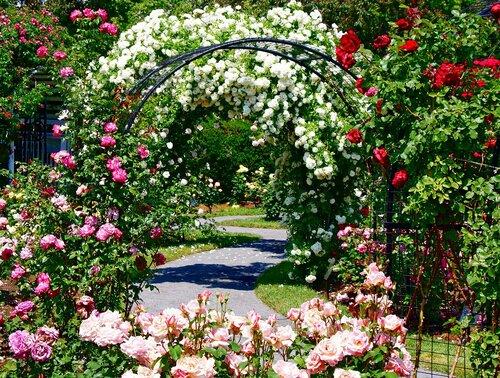 Работы в саду с цветами в августе