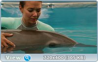 История дельфина / Dolphin Tale (2011) HDRip
