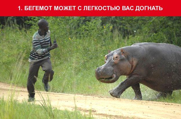 http://img-fotki.yandex.ru/get/1/130422193.95/0_703d6_1bd8318f_orig