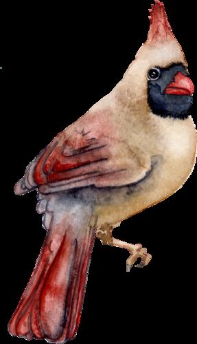CreatewingsDesigns_FF_Bird4.png