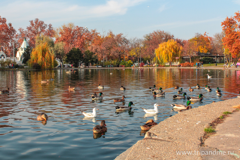 Осенний Будапешт 23.jpg