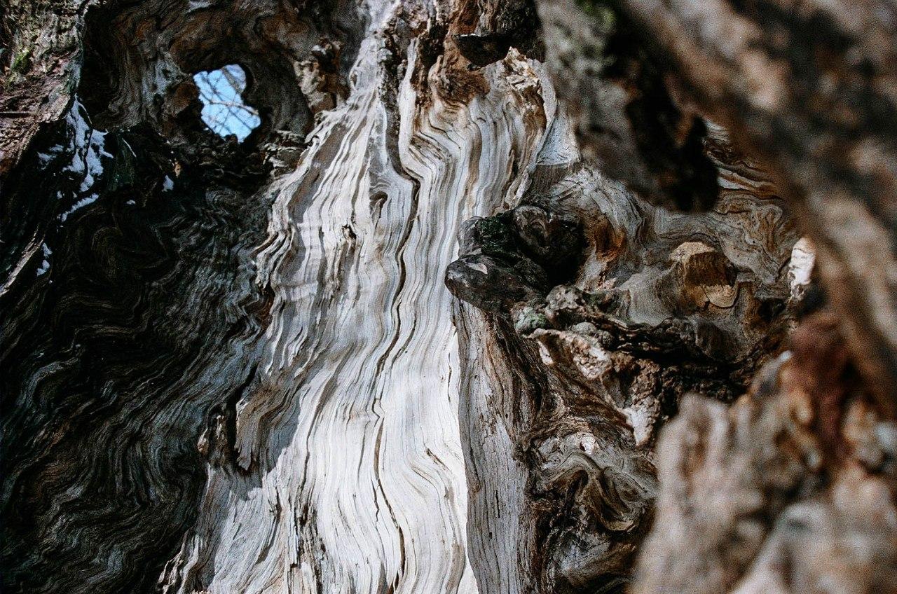 сломанное дерево узоры древесина