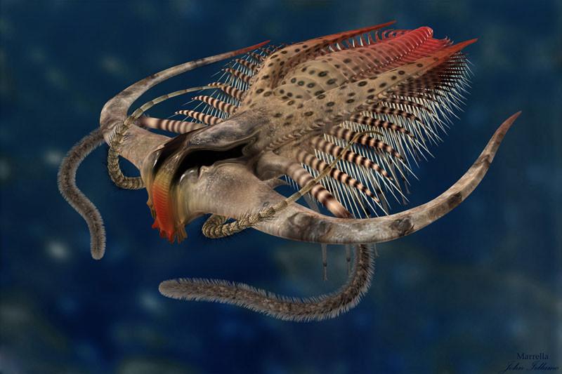 2. Parapuzosia seppenradensis Parapuzosia seppenradensis — это крупнейший известный вид головоногих