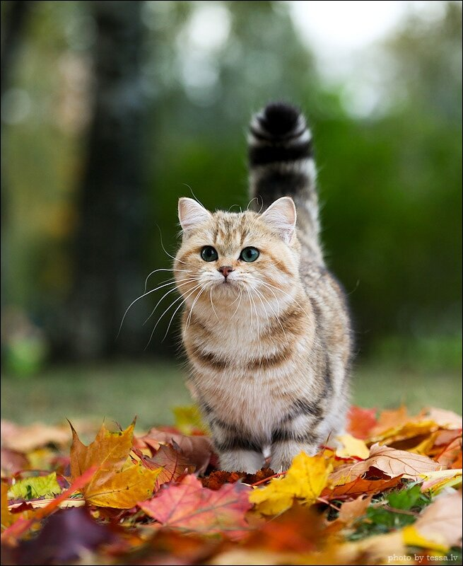 Коты и кошки, Людмила Панкова