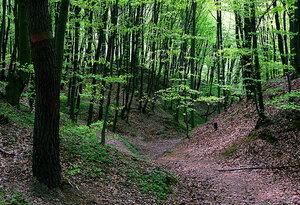 """Глубокие овраги прорезают склоны холмов в заповеднике """"Расточье"""""""