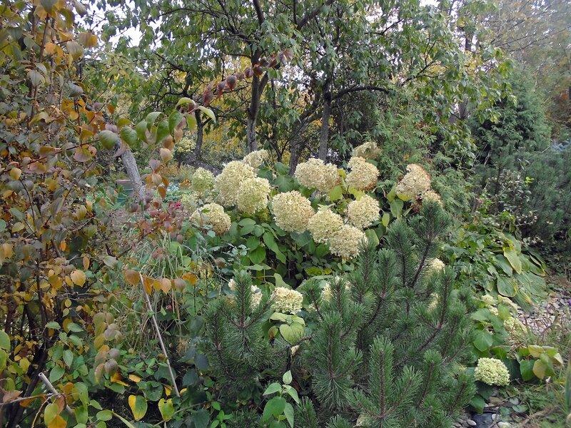 Осенние мотивы райского садика