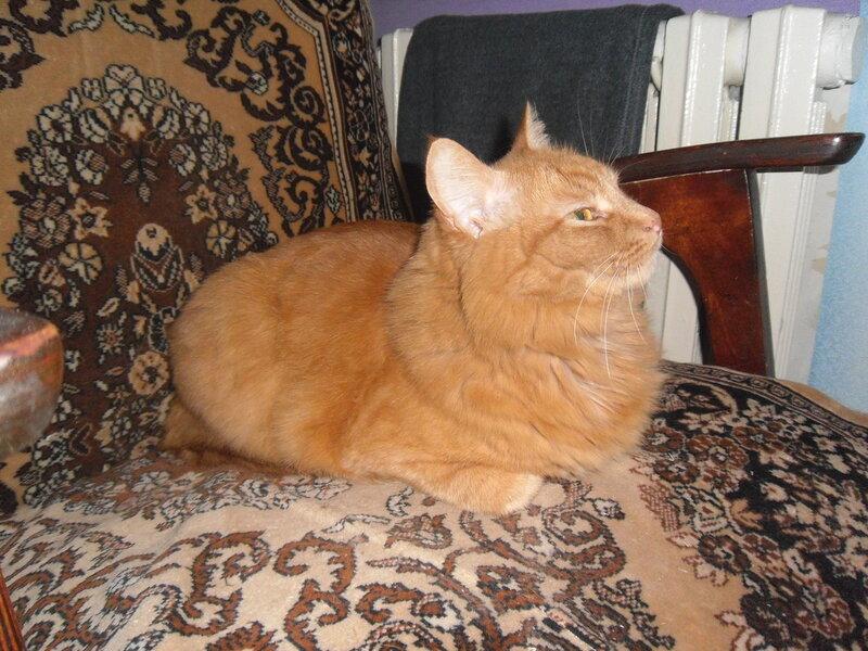 фото рыжей кошки