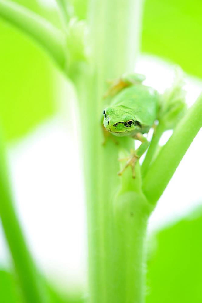 Макро. Fresh GREEN