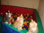 Неразобранное в Кошки
