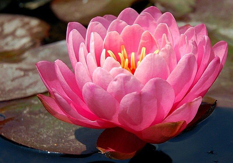 Цветы Таиланда - Блоги пользователей: fanclub.tourismthailand.ru/index.php?option=com_easyblog&view=entry...