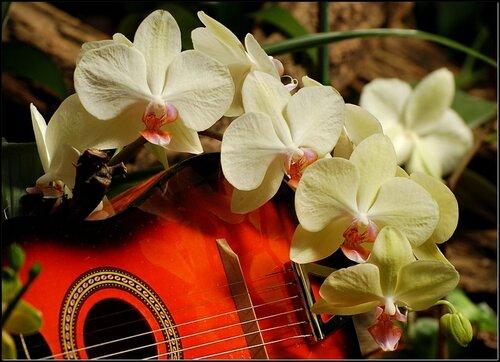 картинки музыка и цветы: