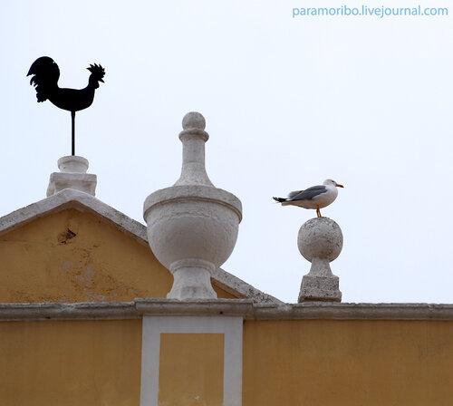 Найдите пять отличий;-) / Чайка-хохотунья Yellow-legged Gull - (Larus cachinnans) на дворце Скеа в Сиутаделле (Ciutadella)