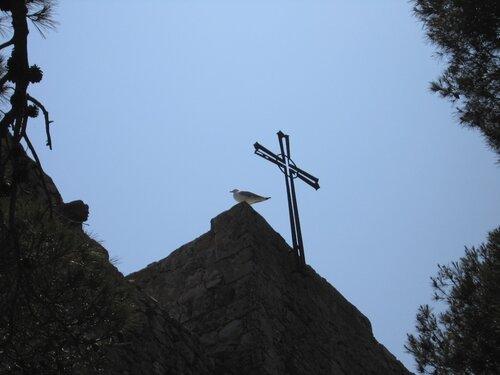 Чайка над Тоссой