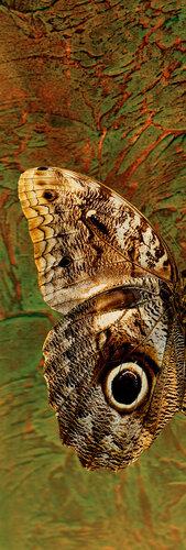 гармония цвета -цифровая фреска,выполненная на бумаге или холсте с помощью плоттера