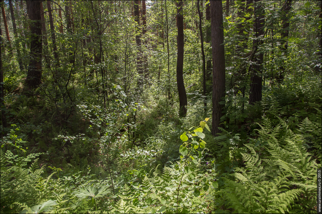 Еланско-Денисовский железный рудник