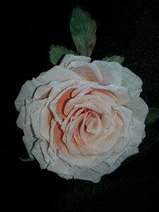 Роза - царица цветов 3 - Страница 2 0_106269_56abb8b0_M