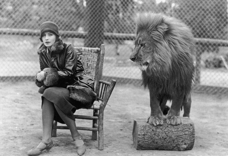 MGM-Lion-2.jpg