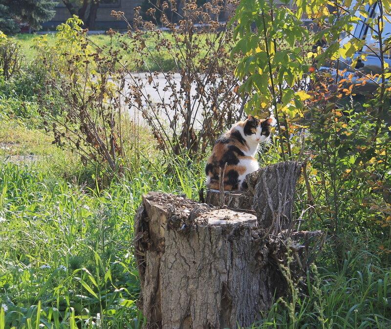 Осенняя кошка.