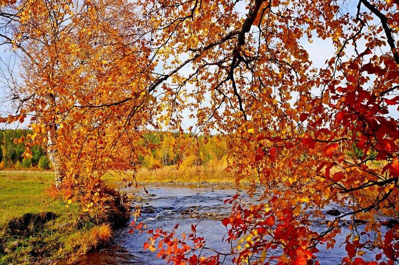 Осенний занавес....jpg