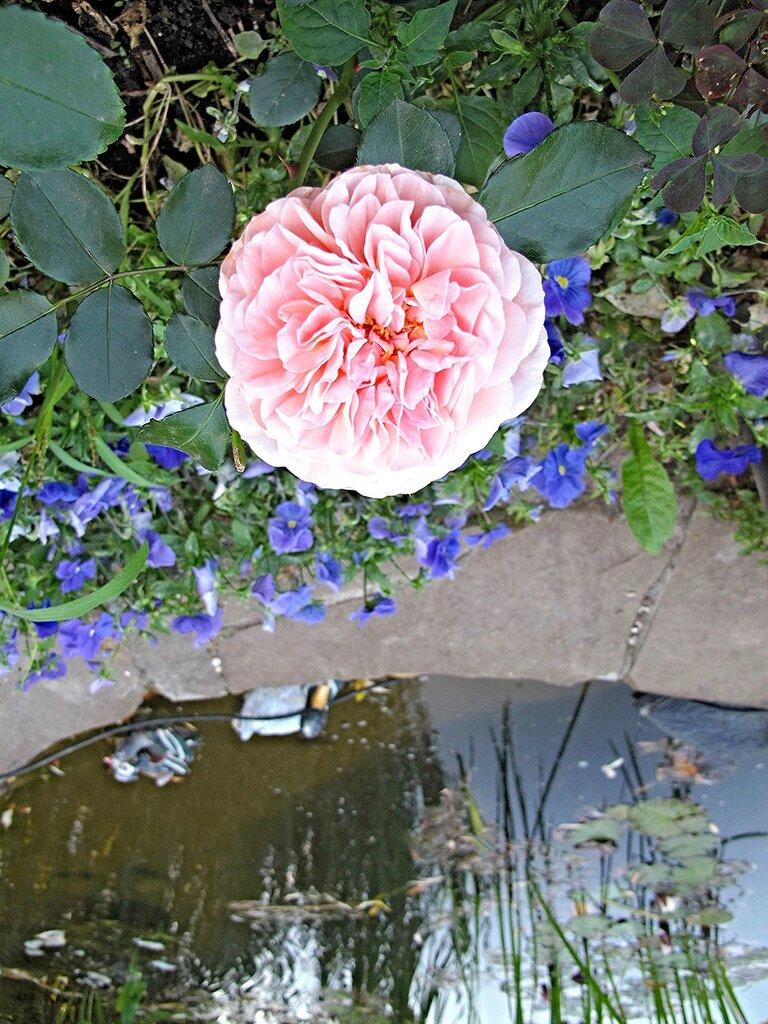 Цветы райского садика