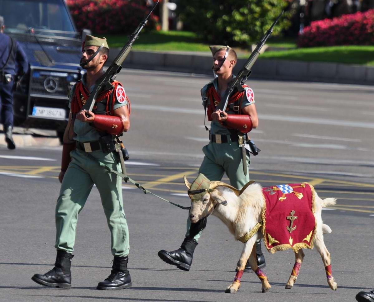 Про козла на веревочке и другие атрибуты Испанского легиона (1)