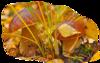 мой клипарт в пнг  грибы