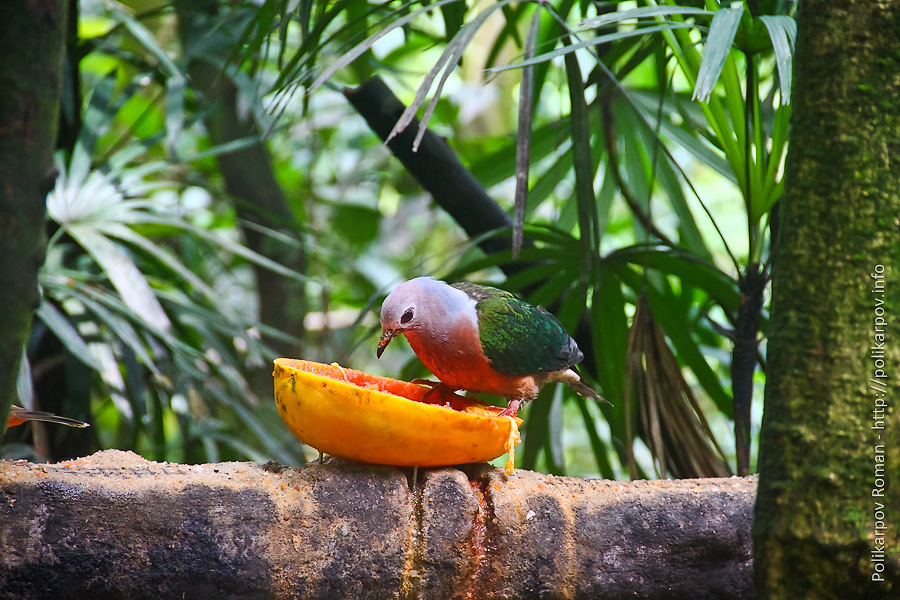 0 c4fa7 89f03013 orig Парк птиц Jurong в Сингапуре