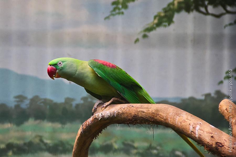 0 c4fb3 e3af1f2a orig Парк птиц Jurong в Сингапуре