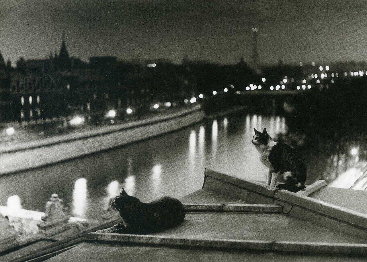 1954. Кошки, ночь, Париж