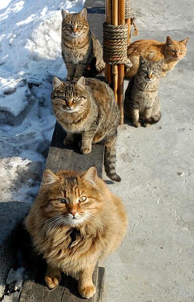 Фотографии мартовских котов. Мартовские коты. Юмор. интернет-фото.