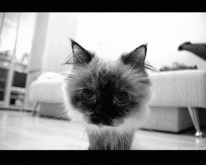 cat cat, ЧБ