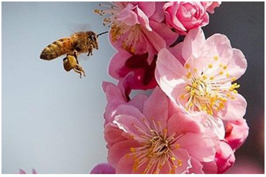 Безопасная защита растений - рекомендации опытного агронома для садоводов-любителей