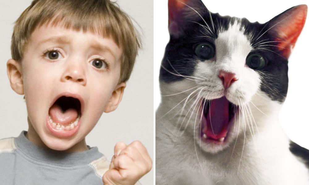 Животные могут выглядеть также эмоционально, как идети
