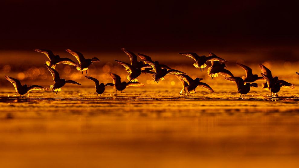 HD конкурс птицы