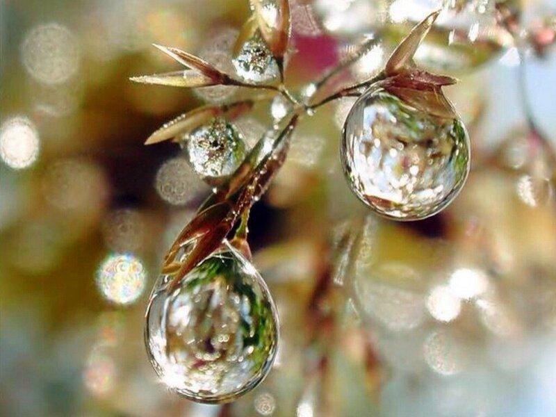 rain_drops_flower_dew_nature_hd-wallpaper-gWCx.jpg