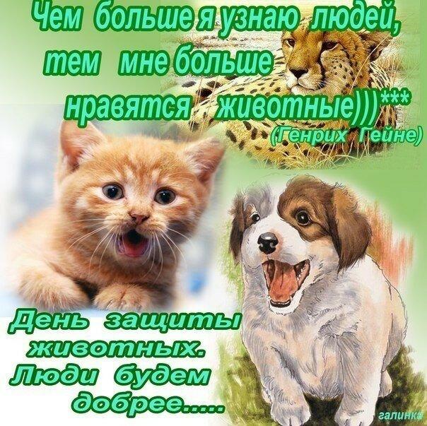 поздравление с днем бездомных животных гороскоп завтра для